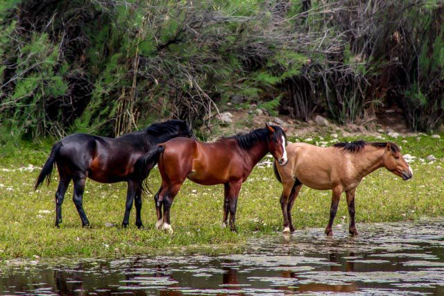 apple cider vinegar for horses fly repellent horses