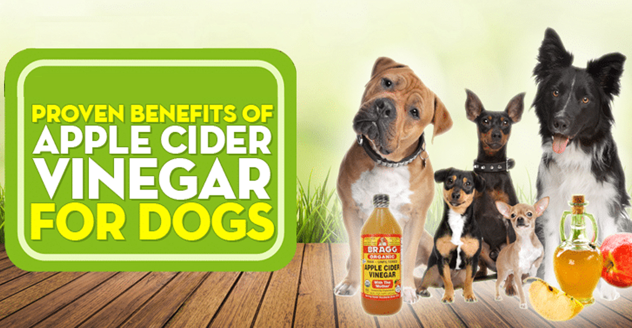 apple cider vinegar dogs