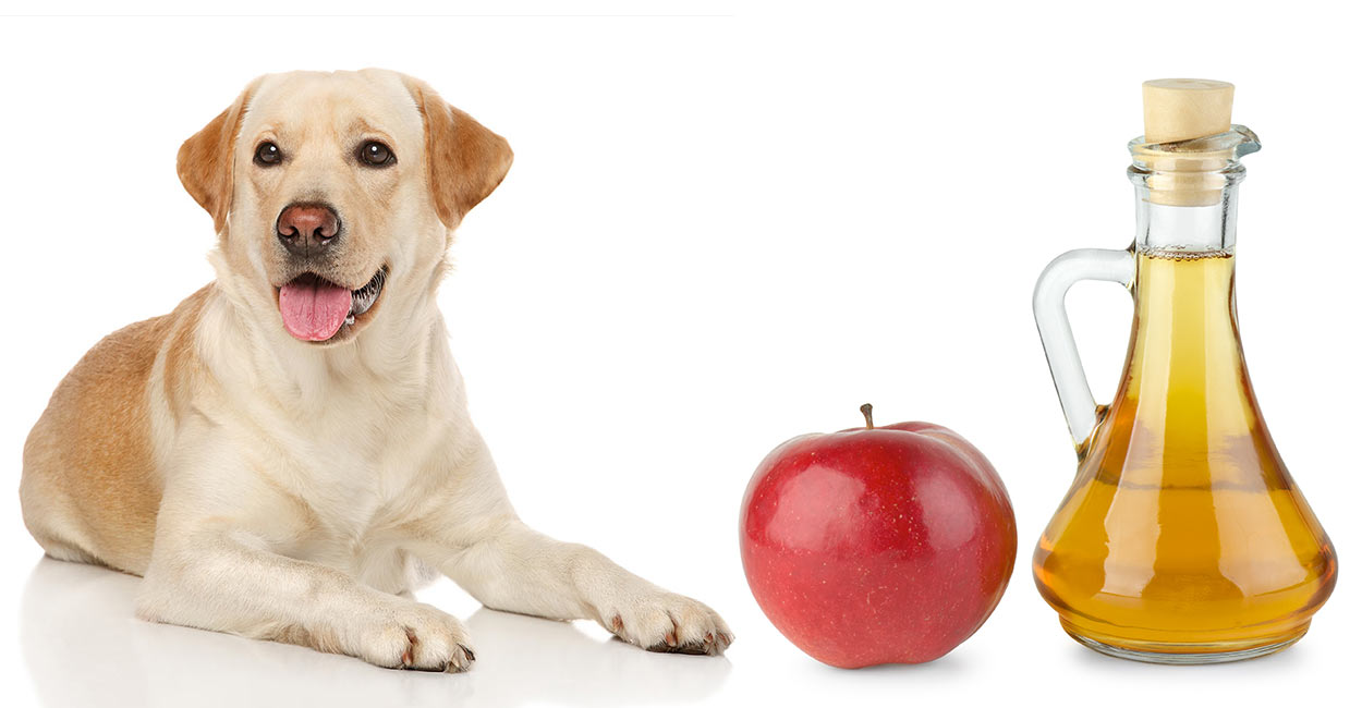 dog tear stains apple cider vinegar for dogs