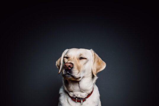 dog's arthritis-apple cider vinegar for dogs