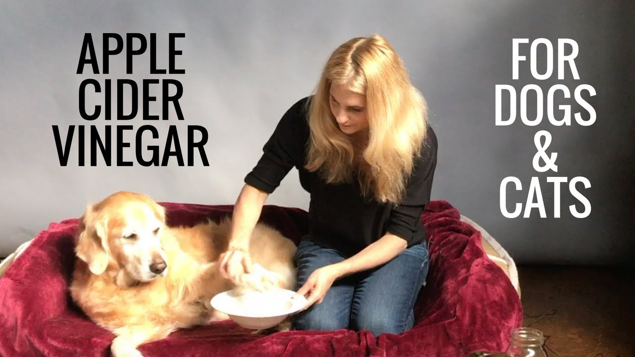 dog teeth cleaning-apple cider vinegar for dogs